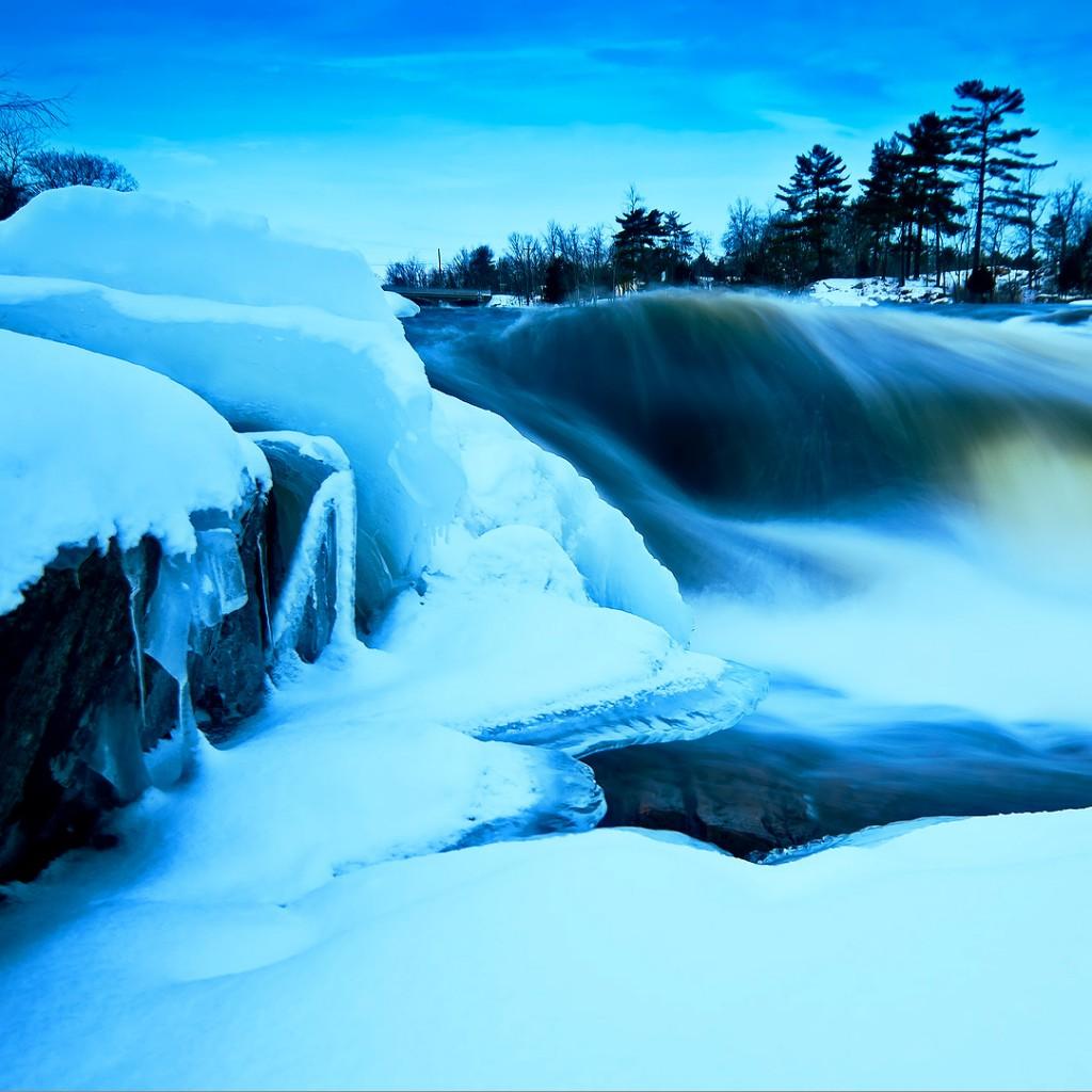 The Frozen Forest   Julian Scott